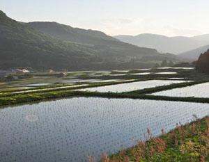 芦ノ原集落の棚田